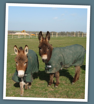 Miniature donkeys love children